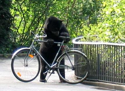 One Bike Thief You WOULDN'T Want To Tackle